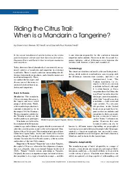 Riding the Citrus Trail:When is a Mandarin a Tangerine?Today, there ar