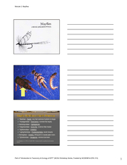 *Baetidae PDF document - DocSlides
