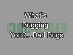What's Bugging You?…Bed Bugs