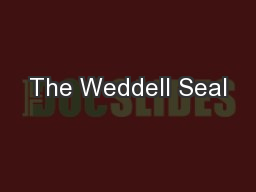 The Weddell Seal