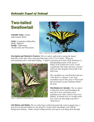tailed swallowtail