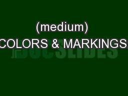 (medium) COLORS & MARKINGS: