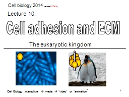 Cell adhesion and ECM PowerPoint PPT Presentation