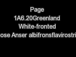 Page 1A6.20Greenland White-fronted Goose Anser albifronsflavirostris1. PowerPoint PPT Presentation