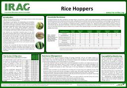 Rice Hoppers