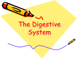 The Digestive System PowerPoint PPT Presentation