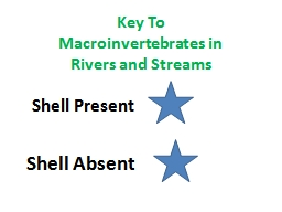 Key To Macroinvertebrates in Rivers and Streams