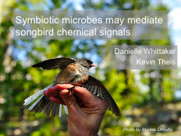 Symbiotic microbes may mediate songbird chemical signals PowerPoint PPT Presentation