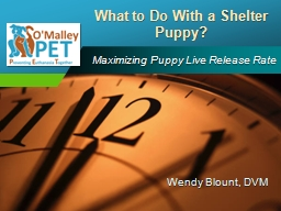 Maximizing Puppy Live Release Rate