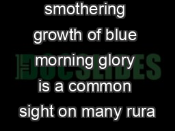 The thick smothering growth of blue morning glory is a common sight on many rura PDF document - DocSlides