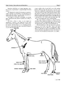 Horse Science Unsoundness and Blemishes Pa e  June  Soundness in the horse is of extreme importance since to put weight on the affected limb even in the standing his efficiency in performance is depe