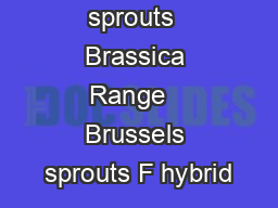 Brussels sprouts  Brassica Range   Brussels sprouts F hybrid