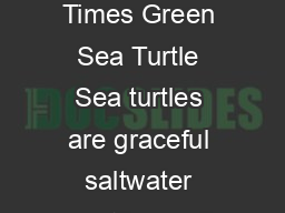 The Kids Times Green Sea Turtle Sea turtles are graceful saltwater reptiles well