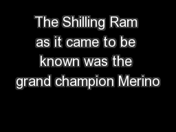 The Shilling Ram as it came to be known was the grand champion Merino
