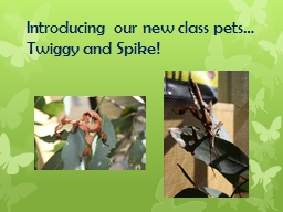 Introducing our new class pets… PowerPoint PPT Presentation