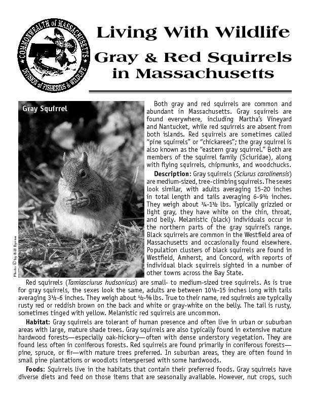Both gray and red squirrels are common and