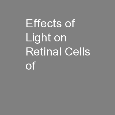 Effects of Light on Retinal Cells of
