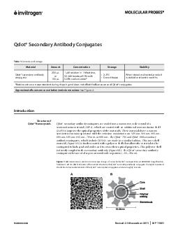 MAN Revised November MP  Qdot Secondary Antibody Conjugates Table  Contents and storage Material Amount Concentration Storage Stability Qdot secondary antibody conjugate  L or  L  M solution in  M be