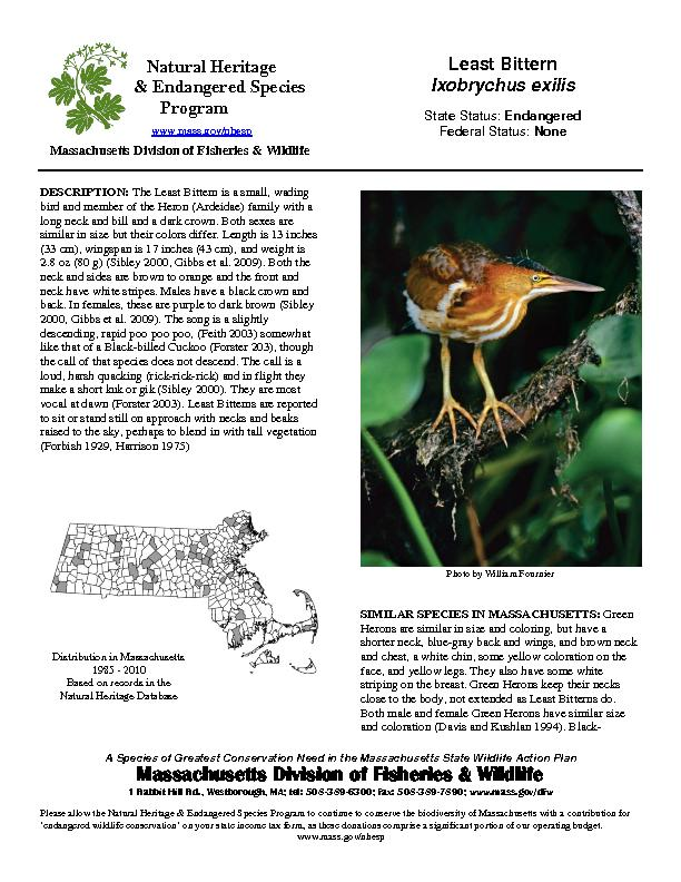A Species of Greatest Conservation Need in the Massachusetts State Wil