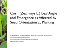 Corn (Zea mays L.) Leaf Angle and Emergence as Affected by PowerPoint PPT Presentation