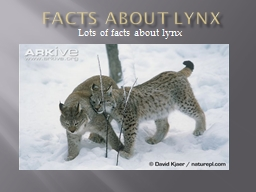 Facts about Lynx