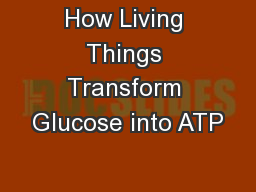 How Living Things Transform Glucose into ATP