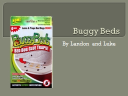 Buggy Beds PowerPoint PPT Presentation