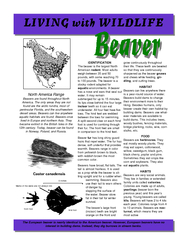 DENTIFICATION The beaver is the largest North American