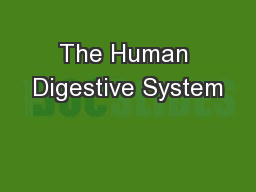 The Human Digestive System PowerPoint PPT Presentation