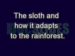 The sloth and how it adapts to the rainforest.