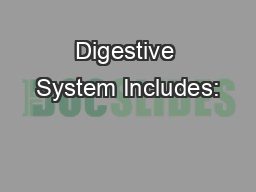 Digestive System Includes: PowerPoint PPT Presentation