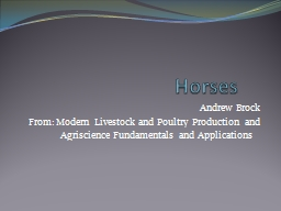 Horses Andrew Brock From: