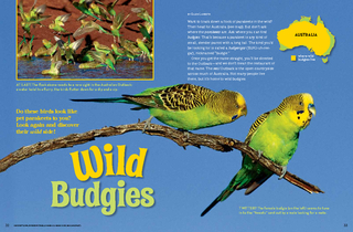 Want to track down a flock of parakeets in the wild Th