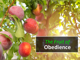 The Fruit of Obedience