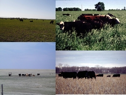 The Environment: Its impact on forage quality and grazing performance