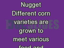 Corn: A Golden Nugget Different corn varieties are grown to meet various food and production needs. PowerPoint PPT Presentation