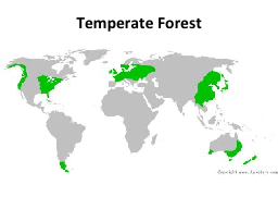 Temperate Forest Temperate Forest
