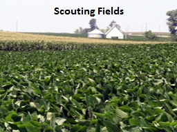 Scouting Fields Overview