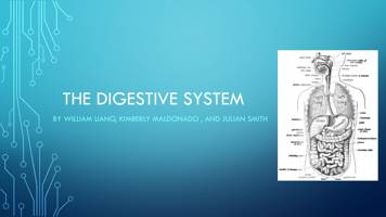 The digestive System By William PowerPoint PPT Presentation