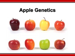 Apple Genetics What similarities and differences did you find between the two apples?