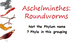 Aschelminthes :   Roundworms Not the Phylum name 7 Phyla in this grouping