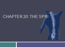 Chapter 20: The Spine Anatomy of the Spine