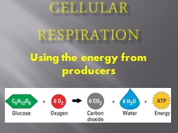 Cellular Respiration Using the energy from producers
