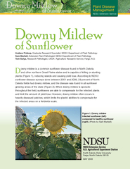 Plant Disease Management NDSU Extension Service Andrew