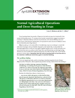 Dove hunting draws thousands of Texans to the eld each year for t