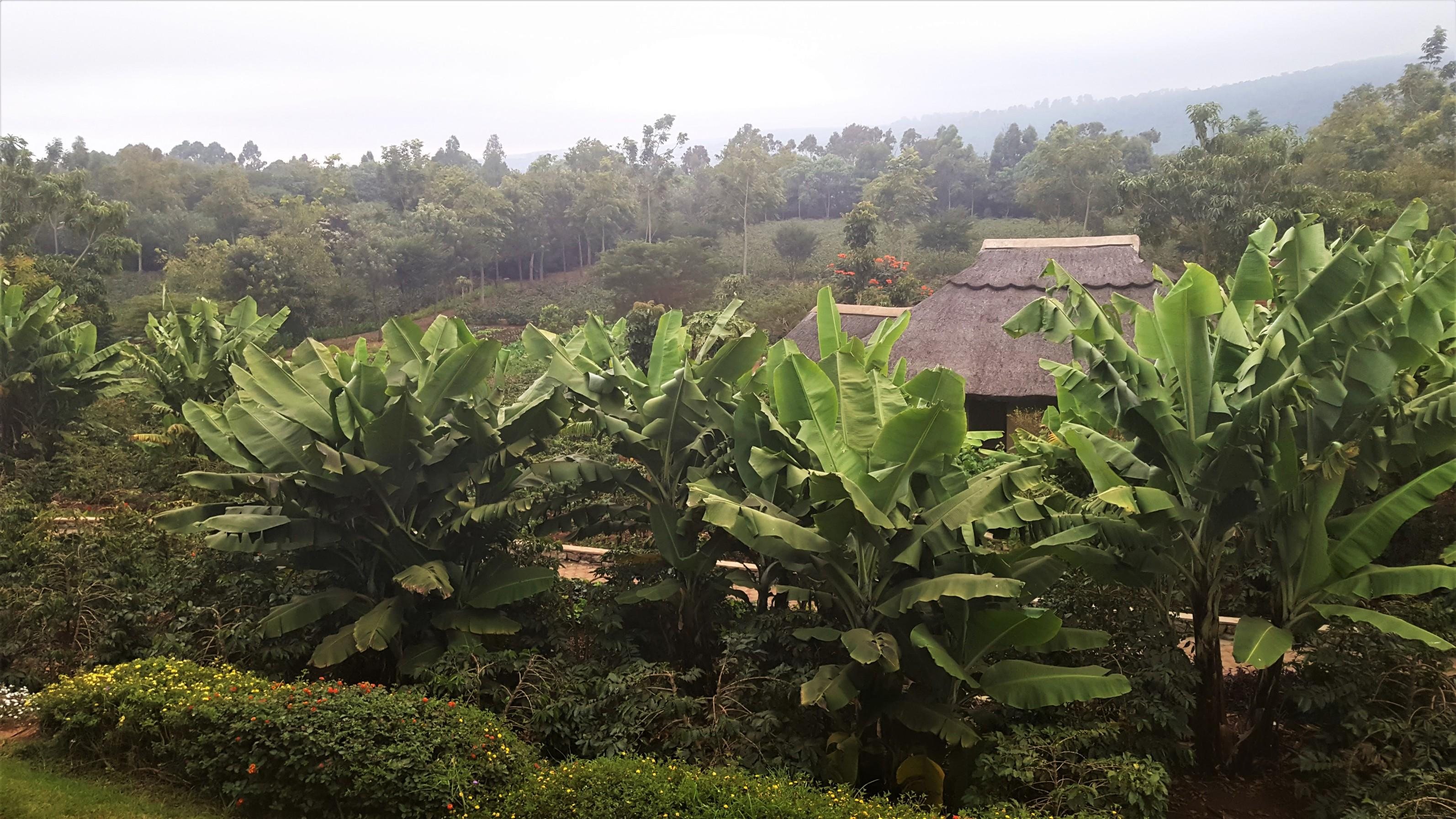 Organic Plantation inside Kitela