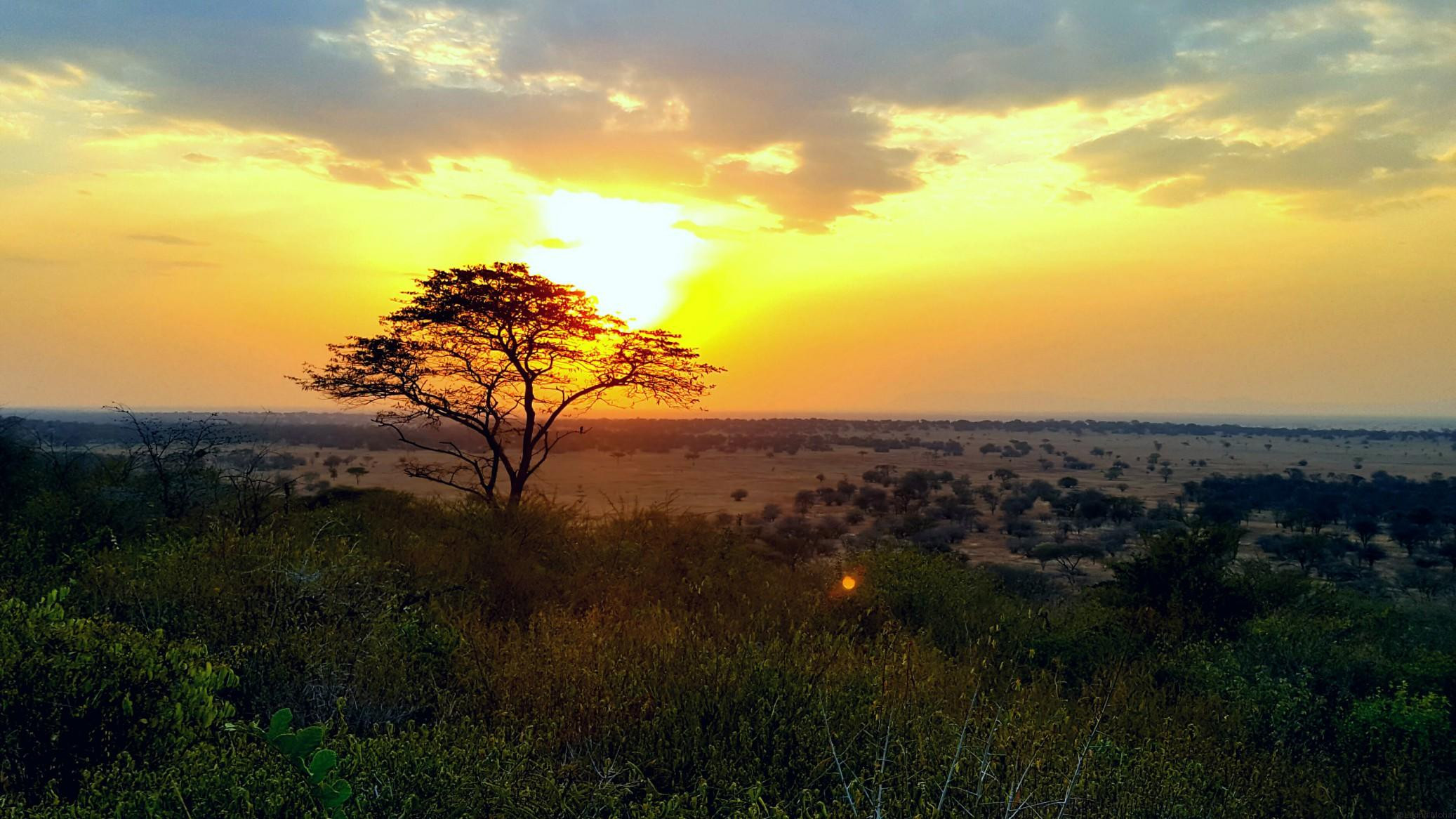 Sunset in Serengeti - Spot the firefly in the picture.
