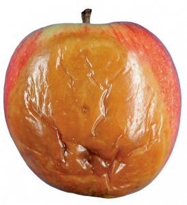 Gray mold commonly originating from infection of wounds on the fruit; decayed area brown, spongy to firm; decayed tissue may become soft in very advanced stage.