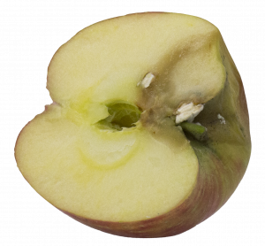 Interior view of gray mold on Honeycrisp originating from a stem bowl infection.