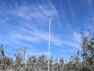 Image show the over-tree portion of the washing system used at this orchard.